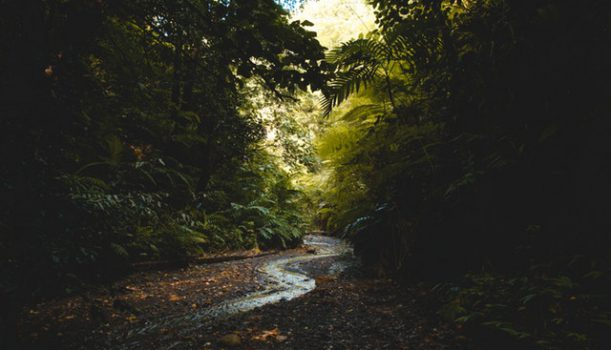 Odgłosy lasu przebadane przez naukowców?