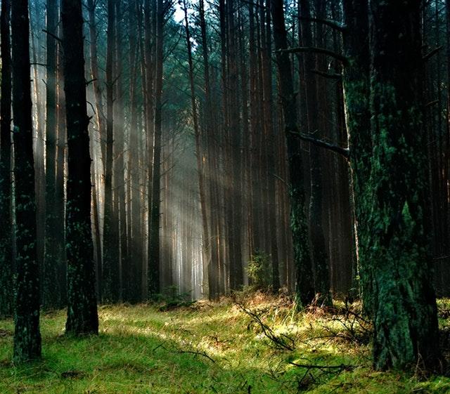 Kąpiele leśne – sposób na zdrowie